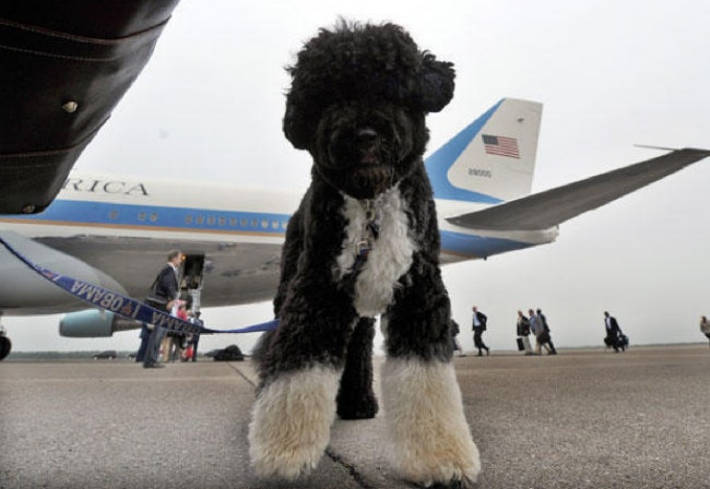 Related: Everything You Need to Know About Flying With Your Dog