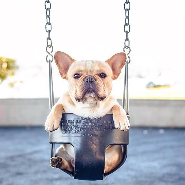 Related: 17 Things Only Frenchie Pup Parents Understand