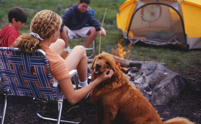 5 Important Things To Keep In Mind When You Go Camping With Your Pup