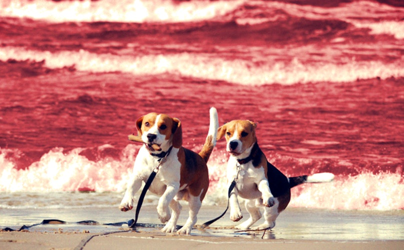 14 Dog Breeds Most Likely To Survive The Apocalypse
