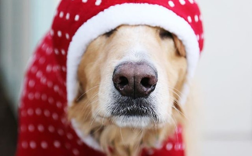12 Holiday Traditions To Start With Your Pup
