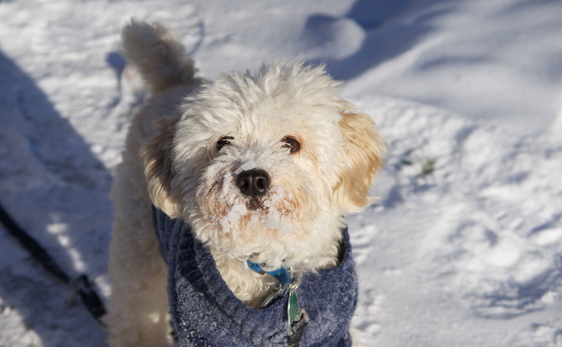 Does My Dog Really Need To Wear Winter Wear?