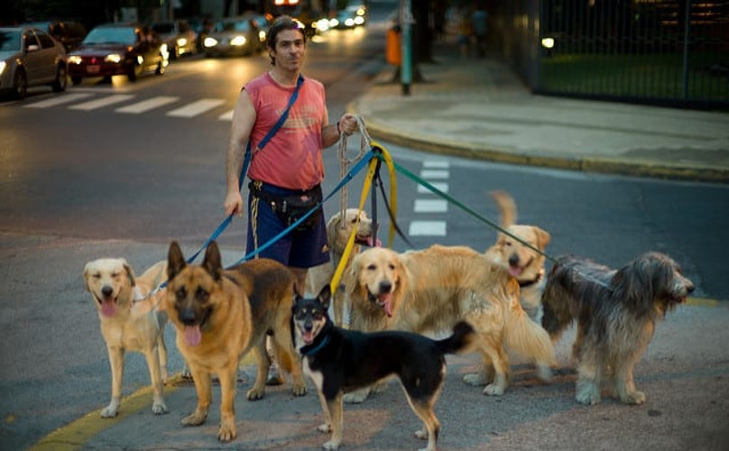 Dogs in Argentina Are Anything But Lonely