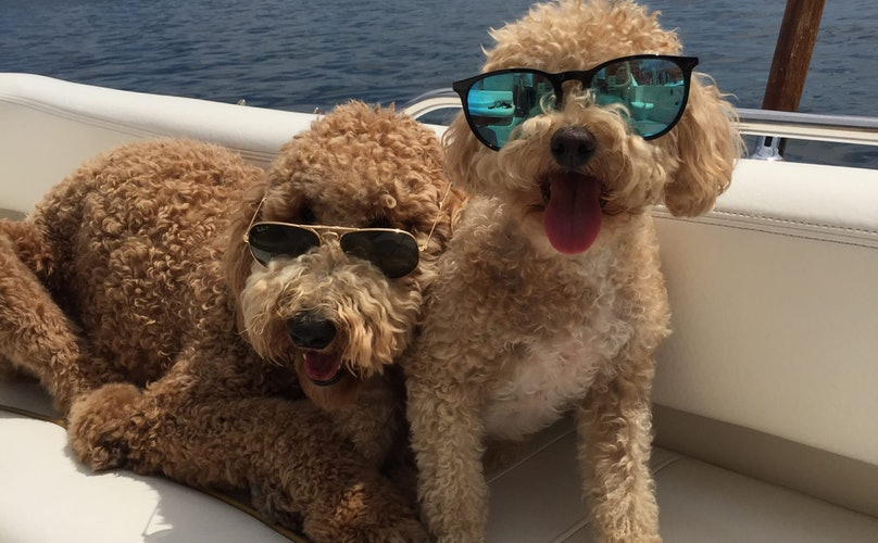 10 Things To Do With Your Dogs in the Finger Lakes