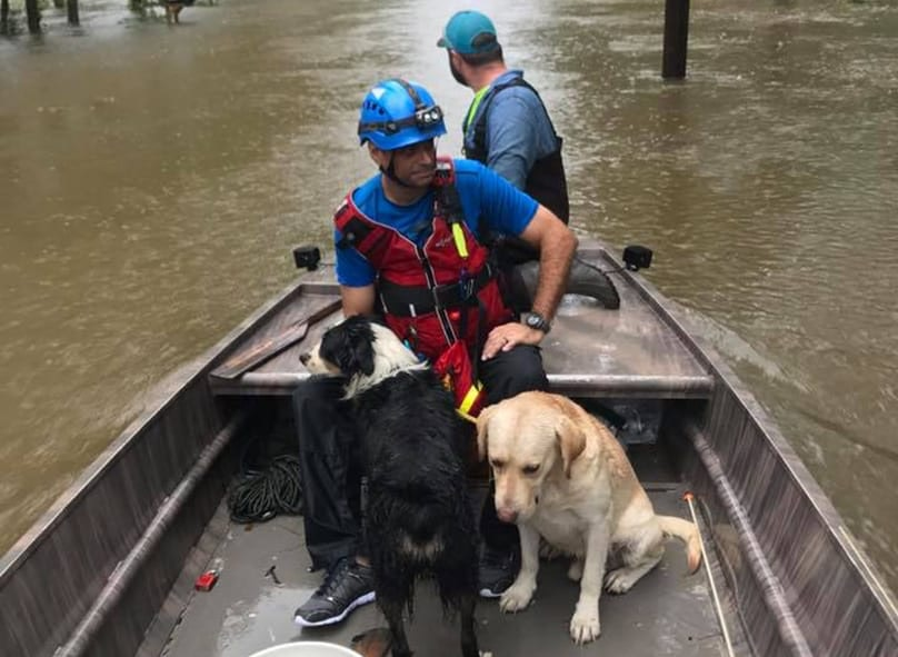 How To Help Houston People And Pets