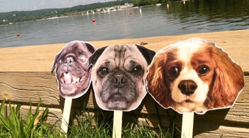 Crazy Dog Peeps, You Will Love This DIY