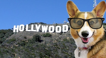 8 Great Movies and TV Shows That Should Have Had a Dog