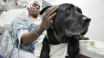 Faithful Lab Jumps Onto Railroad Tracks After Owner