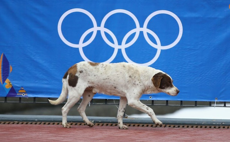 Pupdate: Olympians and Airlines Rally for Sochi Strays