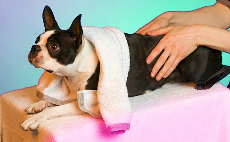Your Pup Can Unwind In The Lap Of Luxury At These Glamorous Dog Spas