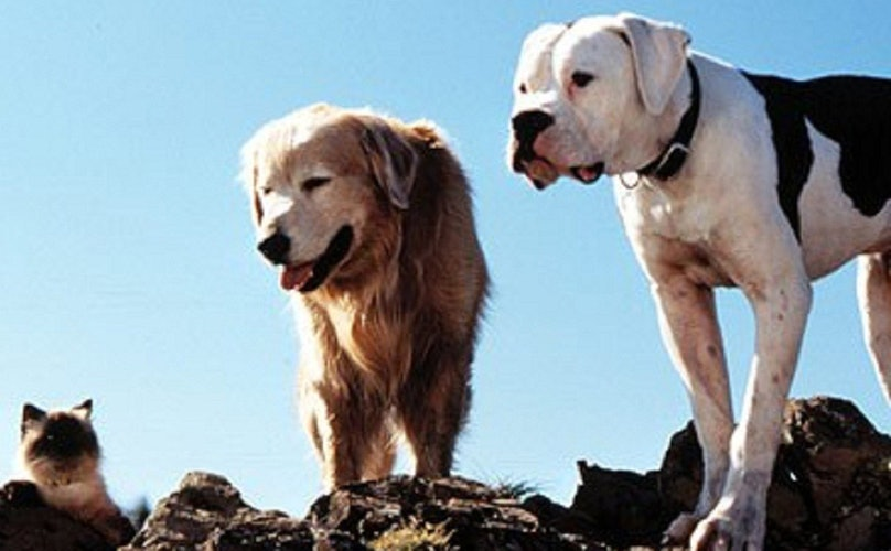 10 Dog Movies You Should Re-Watch Before Summer Ends