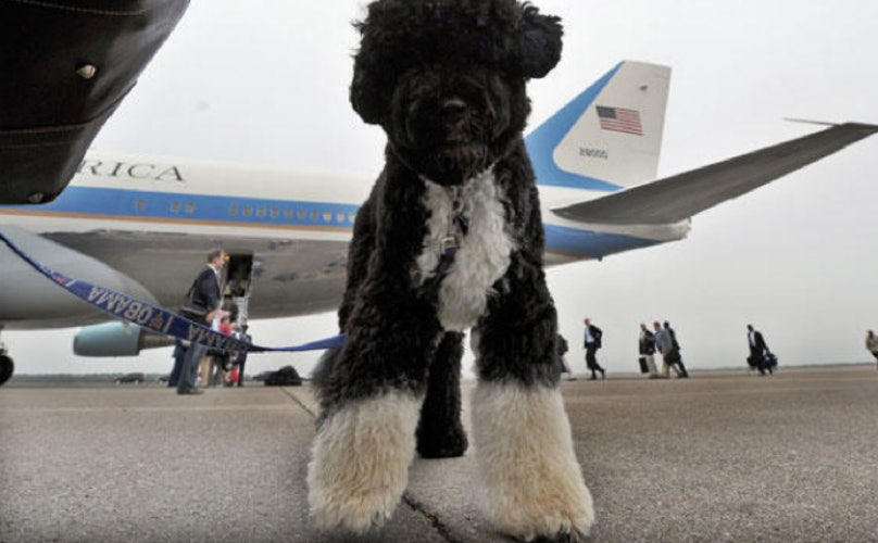Everything You Need To Know About Flying With Your Dog Barkpost