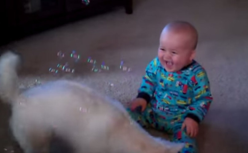 Dog Tries to Protect Uncontrollably Giggling Baby from Bubble Machine