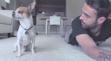 Hot Italian Man Dreamily Leads A Yoga Class With His Talented Dog
