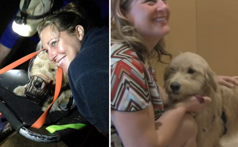 Family Despaired After Dog Fell Off 200 Foot Cliff, But Then a Miracle Happened