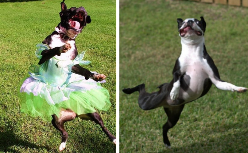 "12 Dogs Who Took The Phrase ""Dance Like No One's Watching"" WAY Too Literally"