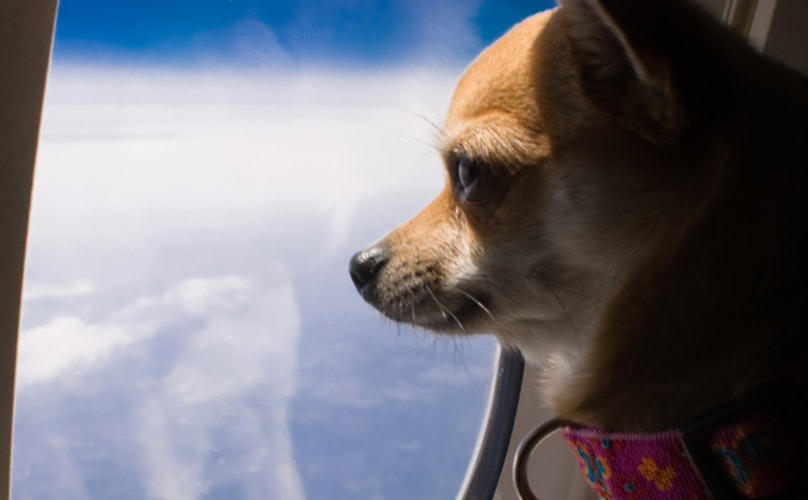 We Looked At Airlines And Pet Incidents, And What We Found Surprised Everyone