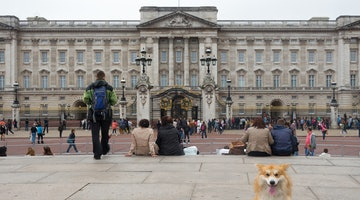 This Globetrotting Corgi Has Visited More Countries than Most of Us Could Ever Hope For
