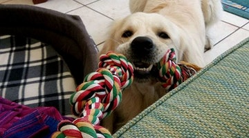 Here's A Real Simple Way To Get Your Pup In The Mood To Play