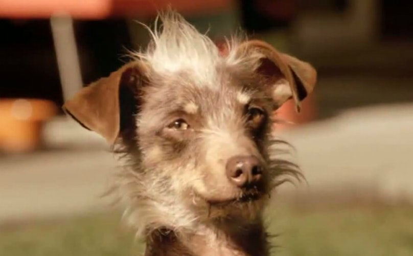 Rescue Dog From Bud Light Super Bowl Commercial Has Coolest Party Trick Ever
