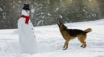 19 Dogs Who Aren't So Sure About This Whole Snowman Thing