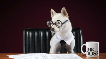 QUIZ: Which Dog Lover Career Would Be Your Perfect Fit?
