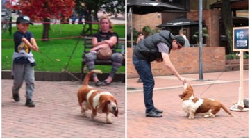 Basset Hound Leads Unsuspecting Pedestrians To A Surprise Gift