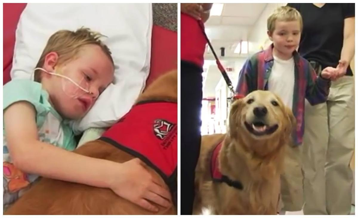 Related: Therapy Dog Helps Boy Injured In Tragic Accident Make Miraculous Recovery