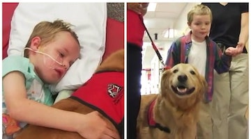 Therapy Dog Helps Boy Injured In Tragic Accident Make Miraculous Recovery