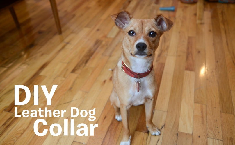 Make A Classy, Rustic Leather Collar For Your Tail-Wagger In The Comfort Of Your Home