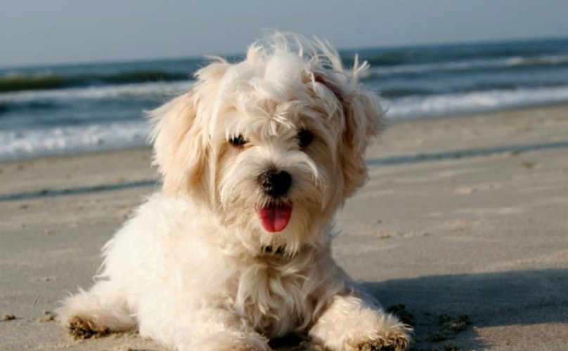 14 Furry Dogs Who Embrace Their Fabulous Beach Hair