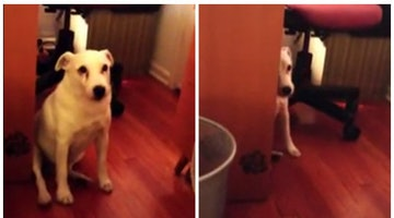 Guilty Dog Scoots Away From Scolding After Trash Can Debacle