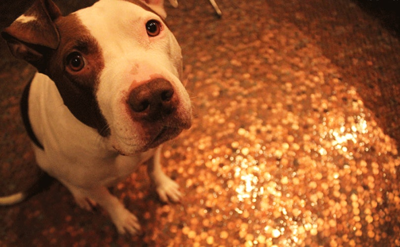 Protect Your Pup: The Common Penny Could Cost Your Dog Its Life