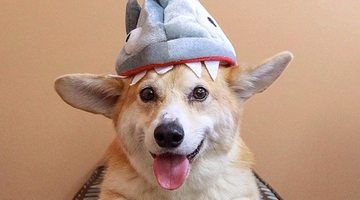 15 Adorable Pups Who Take This Shark Week Thing Literally
