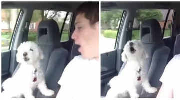 Sassy Dog Becomes The First Backseat Driver You Won't Hate