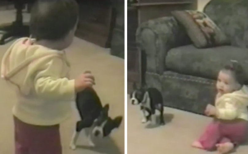 Jealous Dog Ruins Baby's First Steps In The Most Epic Way Possible
