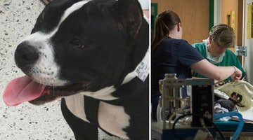 Vets And Pediatric Surgeons Team Up To Save The Life Of Ailing Pup