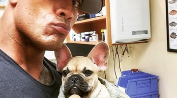 One Of The Rock's Puppies Dies After Eating Something You Likely Have In Your Backyard
