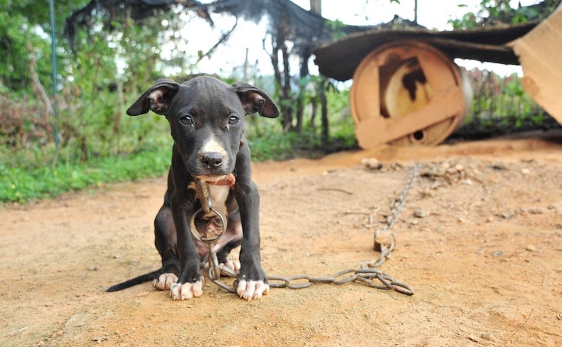 What Is Dogfighting?