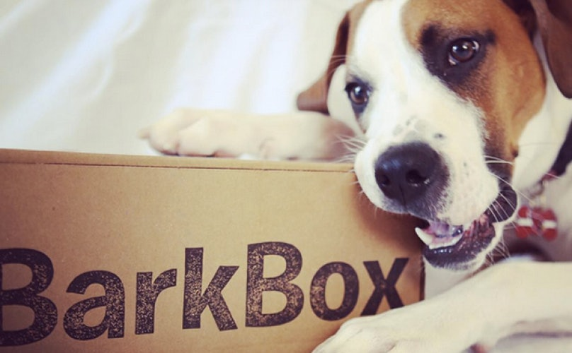 These Photos and Videos Show Just How Crazy Things Get When a BarkBox Arrives