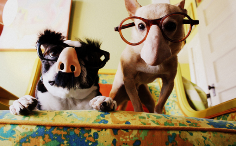 Geek Out Alongside Your Pooch With 17 Spook-Tastic Costume Duos