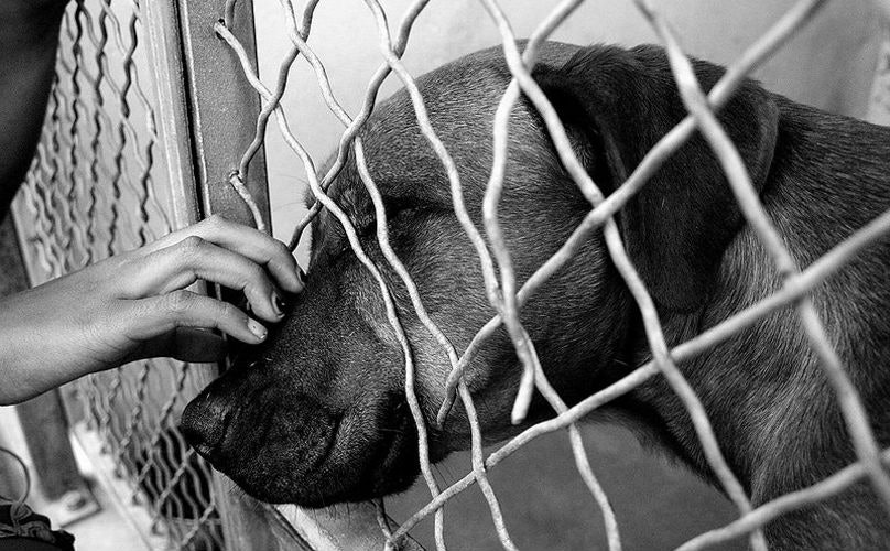 Related: What We're Not Doing That Could End Shelter Euthanasia For Good