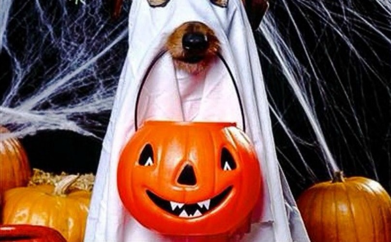 5 Dog-Friendly Versions Of Your Favorite Halloween Sweets