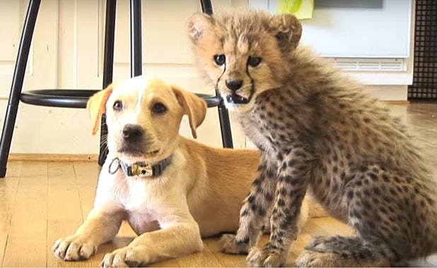 Related: Dog And Cheetah Were Both Abandoned, Now They've Bonded For Life