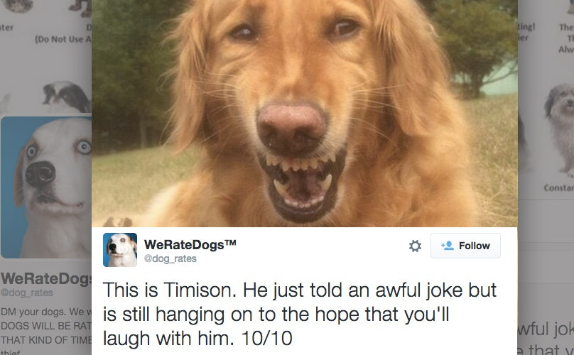 This Twitter Account That Rates Dogs Is Seriously The Best Thing Ever