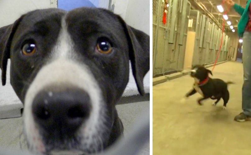 Related: Death Row Dog's Intense Reaction To Getting Adopted Will Make Your Entire Week