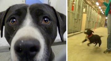 Death Row Dog's Intense Reaction To Getting Adopted Will Make Your Entire Week
