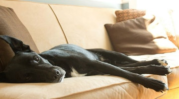 6 Ingenious Tips That'll Help You Keep Your Couch Pup Free