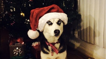 15 Scrooge Dogs Who Do NOT Wish You Good Cheer