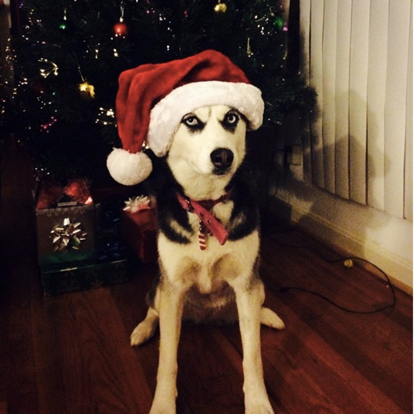 scrooge-dog-feature